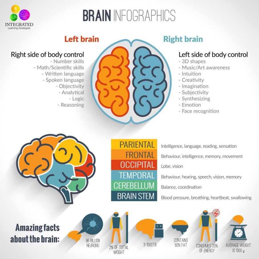 Crossing the midline - left and right brain functions